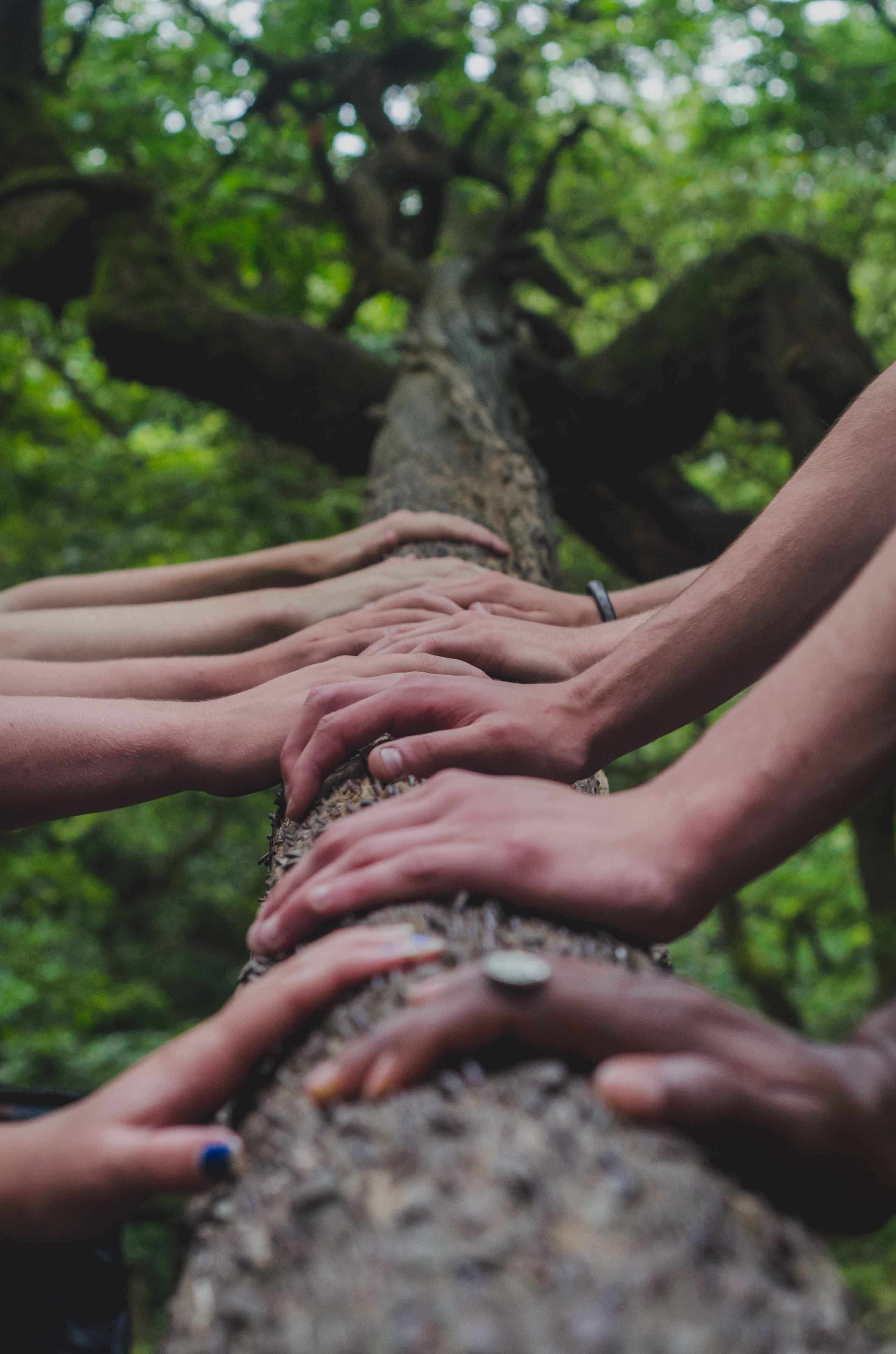 Photo de plusieurs mains touchant un arbre